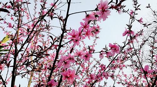 春意盎然,繁花盛开,和网沃一起来一场云上踏青游园之旅吧